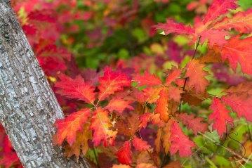 Fall colors shine through in all their beauty near Abiqua Falls, Oregon.