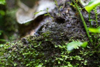See the frog? He really blends in!